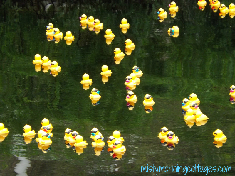 Rubber Duck Race Fundraiser 2015
